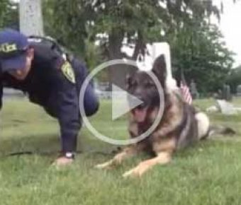 Officer Small and Sampson 22 pushup video